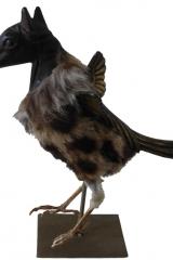 cheval-oiseau